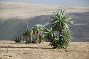 226. Etiopia 2009 - short